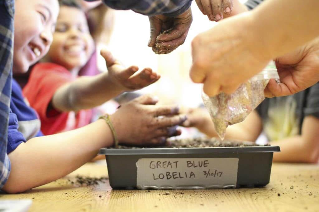 Students plant native seeds