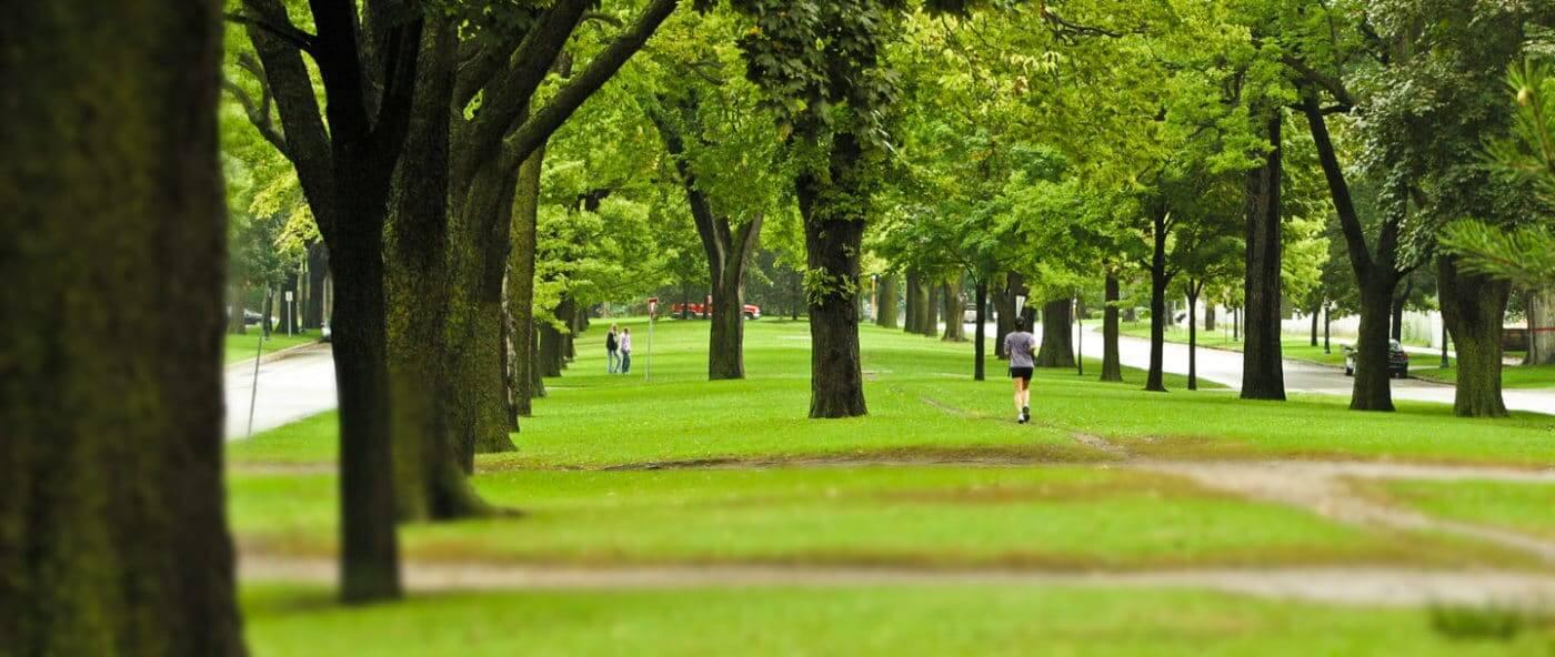 Urban tree canopies provide many benefits.